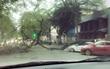 Hà Nội: Cây cổ thụ đổ đè bẹp ô tô trên phố Lý Thường Kiệt