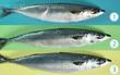 Đi chợ chỉ cần để ý 5 đặc điểm này sẽ chọn được cá tươi ngon đúng chuẩn