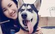 Cô gái cho bạn thân mượn chó cưng Husky để vượt qua stress, bạn bán chó lấy 2 triệu tiêu xài