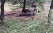 Huế: Phát hiện thi thể nghi bị chết cháy trong rừng dương