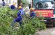 Hà Nội chặt, di dời hơn 1.000 cây ở đường Phạm Văn Đồng