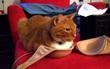 22 chú mèo mặt dày bạ đâu cũng nằm đấy không biết xấu hổ là gì
