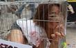 Nhiều thiếu nữ Hàn Quốc co ro trong lồng để phản đối ăn thịt chó