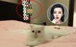 Chủ đích khoe mèo cưng, Phạm Băng Băng không ngờ để lộ nội y treo bừa bộn trong phòng?