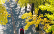 Không phải tự nhiên mà người ta nói: Nhất định phải đến Hàn Quốc một lần vào mùa thu lá vàng