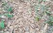 Chỉ người có khả năng đặc biệt trên thế giới mới nhìn thấy con rắn độc nấp ở đâu