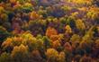Ngắm phong cảnh đẹp đến ngoạn mục của những khu rừng vào mùa thu