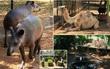 Nạn đói triền miên, người dân Venezuela đột nhập vào sở thú trộm động vật để ăn thịt
