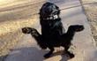 """Chú chó với điệu nhảy """"Lý con cua"""" lọt tầm ngắm của các tay chế ảnh"""