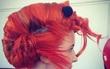 15 thảm họa tóc tai trông như thế giới sinh vật học thu nhỏ