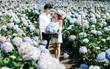 Cánh đồng hoa cẩm tú cầu đẹp mê hồn sẽ là điểm đến hot nhất ở Đà Lạt những ngày tới!