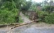 Bão số 4 suy yếu thành áp thấp nhiệt đới sau khi đổ bộ vào Quảng Trị