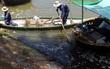 Đà Nẵng: Cá chết bất thường nổi trắng kênh Phú Lộc, bốc mùi hôi thối nồng nặc