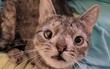 Cô mèo hoang đổi đời nhờ vào đôi mắt lác có một không hai