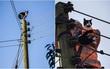 Anh: Ngắt điện cả khu vực để giải cứu chú mèo bị mắc kẹt trên cột điện suốt 24 tiếng đồng hồ