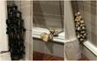 Mới mua nhà hơn 1 năm, chủ hộ bàng hoàng phát hiện ra nấm dại mọc thành chùm khắp các khe tường
