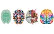 Bộ não bạn yêu thích cho bạn biết những điều tuyệt vời của bản thân