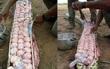 Chắc chắn bạn không biết: Quái vật Nam Mỹ - trăn Anaconda đẻ trứng hay đẻ con?