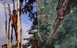 Sức sống phi thường của bộ lạc sống trong những ngôi nhà trên cây cao tới 50m, tách biệt với loài người