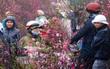 Tuần cuối năm Bính Thân: Bắc Bộ mưa rét, Nam Bộ nắng ấm