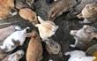 Có một thiên đường dành cho loài thỏ ở Nhật Bản