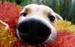16 chú chó xấu tính suốt ngày thích hóng chuyện thiên hạ