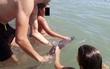 Bị du khách truyền tay nhau vuốt ve rồi selfie sau khi mắc cạn, chú cá heo con chết thảm