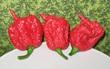 Có một loại ớt xấu ơi là xấu nhưng cay gấp 1.000 lần ớt thường và có khả năng... lấy mạng người
