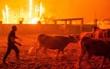 Bồ Đào Nha gồng mình chống chọi với giặc lửa, 36 người chết