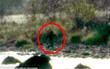 Người nông dân hoảng sợ khi phát hiện tận 5 sinh vật bí ẩn giống Bigfoot trong trang trại