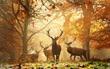 17 khoảnh khắc hồn nhiên giữa trời thu của các bé động vật