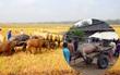 Cả người và trâu bị sét đánh chết ngoài đồng trong cơn mưa đầu mùa