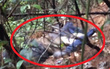 Đang livestream cảnh hái nấm trong rừng, MC bất ngờ phát hiện thi thể đang phân hủy