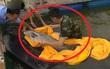Cá trắm cỏ nặng hơn 50kg mắc lưới, người đánh bắt kinh ngạc!