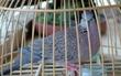 """Mang thuốc độc đến nhà dọa rồi """"xin đểu"""" 2 con chim để đòi nợ"""