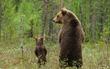 17 khoảnh khắc đáng yêu của các gia đình động vật trên khắp thế gian