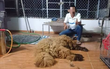 Mua chó ngao Tây Tạng về làm thịt nhậu rồi khoe trên Facebook, thanh niên Bạc Liêu bị chỉ trích dữ dội
