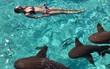 Vô tư chụp ảnh giữa đàn cá mập, cô gái không ngờ phải nhận kết cục đau đớn