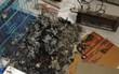 Chủ quên không tắt máy sưởi, đàn chó Poodle 8 con bị chết cháy