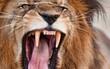 """Số phận con người sẽ """"thảm khốc"""" như thế nào nếu bị các loài động vật này tấn công?"""