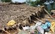 Nghệ An: Lốc xoáy tốc mái hàng chục ngôi nhà, một cháu bé 5 tuổi nguy kịch