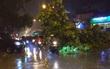 Hà Nội: Gió lốc lớn, xà cừ đổ chắn ngang đường Phạm Văn Đồng