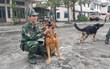Bi hài: Vợ chiến sĩ Biên phòng ghen vì chồng quá thân với... chó