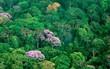 Không ngờ biến đổi khí hậu lại khiến rừng nhiệt đới này nở hoa