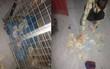 Boss dùng tiền lì xì của sen để trải thảm bước đi từ nhà vào chuồng cho sang chảnh