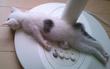 15 khoảnh khắc nằm ngủ quên sầu của boss thú cưng