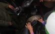 """""""Cá lạ"""" bị chính quyền địa phương bắt lên bờ, người dân vẫn chen lấn chạm lấy may"""