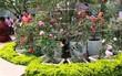 Sẽ trưng bày hơn 1.000 gốc hồng thật sau khi gây thất vọng vì nhiều hoa giả và héo trong lễ hội Bulgaria năm ngoái
