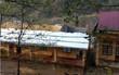 Giông lốc bất thường ở Lào Cai, gần 200 nhà dân bị đánh hỏng