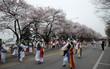 Rộn ràng mùa lễ hội hoa Hàn Quốc